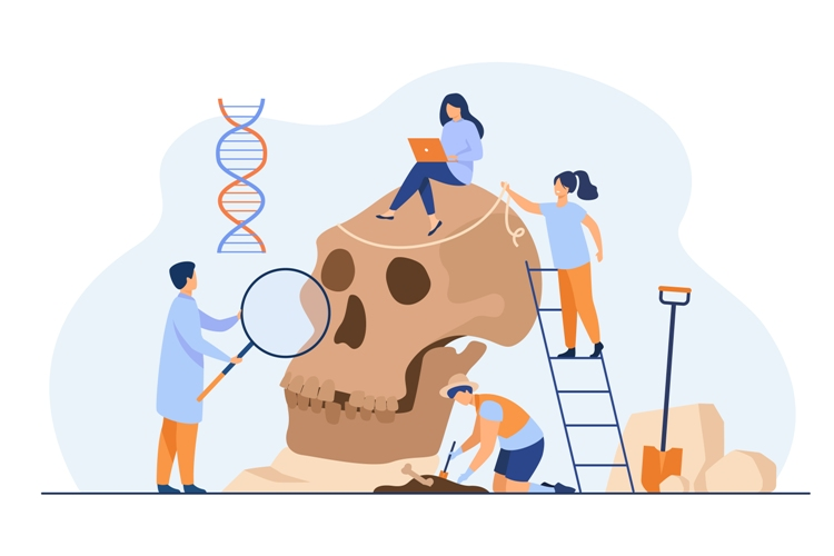Tiny anthropologists studying Neanderthal skull